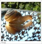 Snail Vanity by halcyonschism