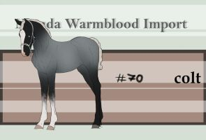 Nevada Warmblood 70 by BRls-love-is-MY-Live