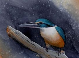 Kingfisher by Night-Owl8