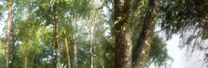 trees by DarraChese