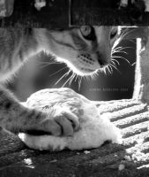 Portrait Of A Cat by Alharaca