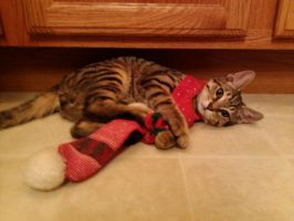 Tigger At Christmas Time by Lovely-LaceyAnn-Art
