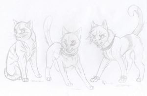 Warriors Characters 13 by KasaraWolf