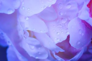 droplets on white by jagerion