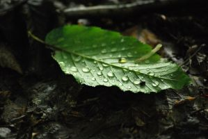 summer drops by Lk-Photography
