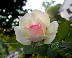 Dahlonega Rose by ulfchild