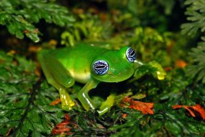 Glass Frog by lizardman1988