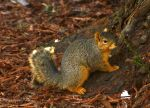 Posing Squirrel by prancingdeer722
