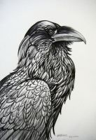 Raven Portrait by HouseofChabrier