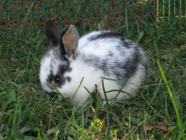 Baby bunny: stock by Lythre-does-photos