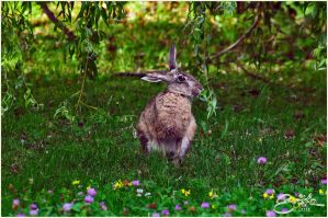 Hare 1 by brijome