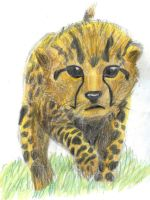 baby cheetah by strunza