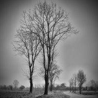Winter Trees I by MarioDellagiovanna