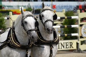 Warsteiner Brewery Horses by toteZitrone