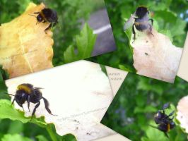 bumblebee rescue by LadyxWinter