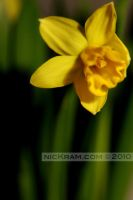 spring_preview_2 by nicKram