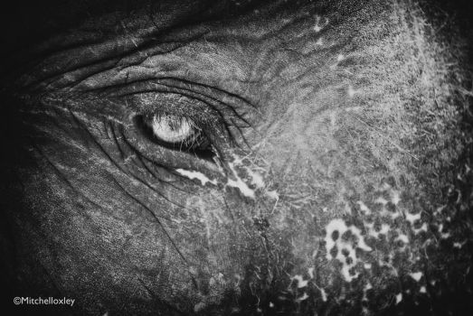 The eye of an elephant by filthydes
