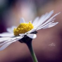 .: daissy :. by all17