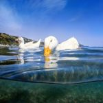 Ducks in the sea by fly10