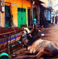 A stroll in India by tugalot