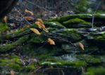 Leaves and Moss by JohnyNoir