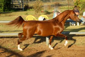 RA Trot side on in sun by Chunga-Stock