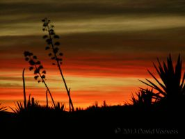 Agave Sunset 02 by DavidVeevers