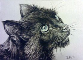 Krista's Kitty - ACEO by SuzanneMoseley