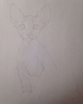 Hairless Cat for an Art Trade by Leopardwisker