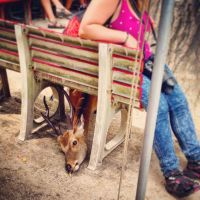 Dat deer wanted his french fry by Idris-Astrid