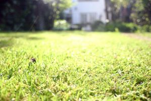 The grass is greener by xMythycle
