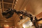 Smithsonian - T rex by quicksilver123
