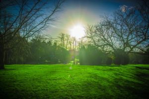 Shadowed Gardens Stock, Sunset by TomasMascinskas