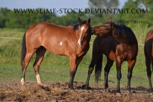 August 2015: AQHA + APHA horses interacting by slime-stock