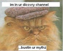 Mythbusters cat pic by CaliforniaHunt24