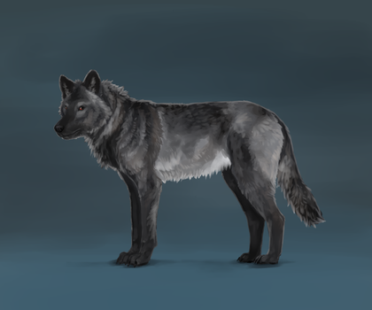 Rian - wolf form by Conall22
