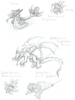 Interlaxia's Creatures by Chime-Fawler