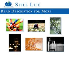 Still Life Theme by PhotographersClub