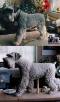 SCHNAUZER by Sculptor-Robert-D
