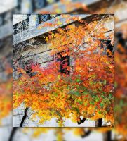 A Myriad of Fall Colors by Joe-Lynn-Design