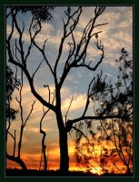 Shaded Silhouette by eswanson