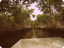 Everglades by LaurenDSizzle