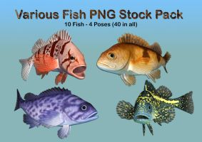 Various Fish PNG Stock Pack by Roys-Art