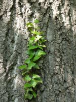 Ivy line2 by Wicasa-stock