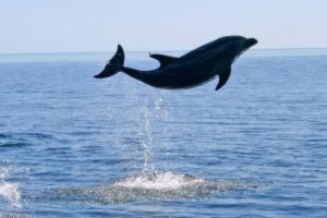 Dolphin Jump by Atmosphotography