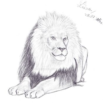 Lion by SamanthaPL