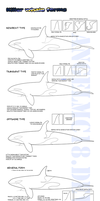 -Killer whale forms- by AngelMC18