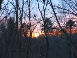 A Sunset In The Woods Of Massachusetts by Brooklyn47