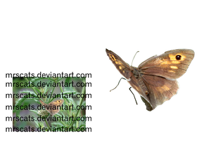 Butterfly3-png by mrscats