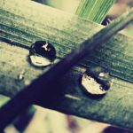 When Nature Cries Pearls by Pensieri